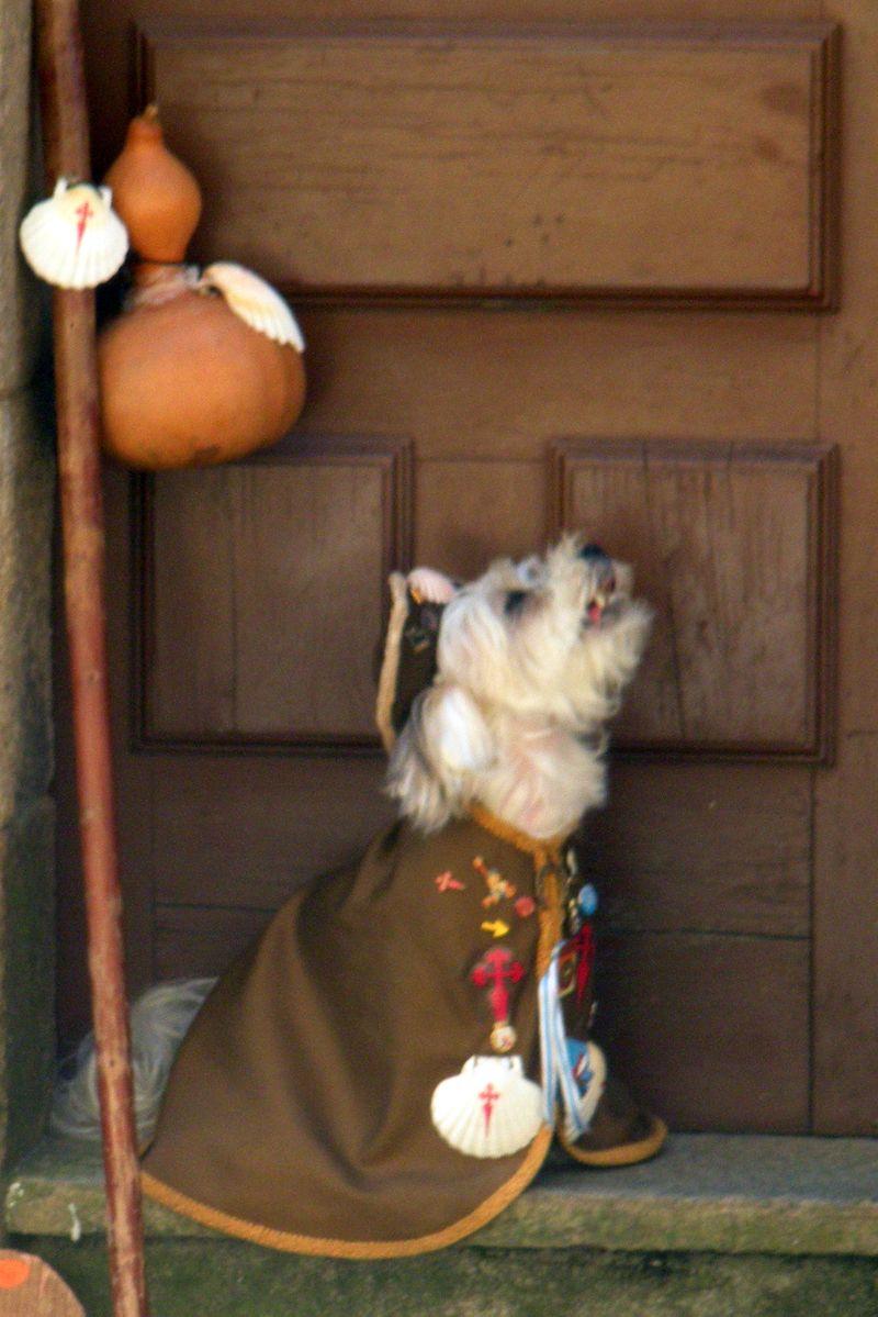 Canine pilgrim
